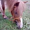 horsepasionlovedu-29