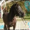 miss-horses-miss