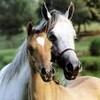 matiasse-cheval