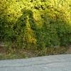 mannekin-en-herbe