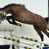 Horses-coeur