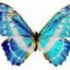 papillon1403