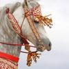 cheval-arabe-du-monde
