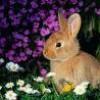 sauvons-les-lapins