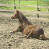 I-l0ve-chevaux