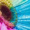 happy-colors24