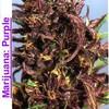 Marijuana-Weed