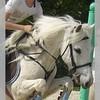 x-horses-passion