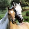 chevaux1318