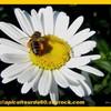 apiculteurdu60