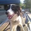 lovethecatdog
