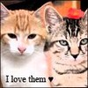 cute-kitten-x3