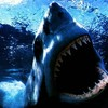 shark972