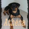 athena97421