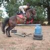 love-horse-du-76