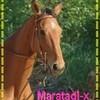 maratadj-x