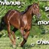 la--passion--du--cheval