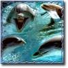 dolphina001