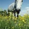 horseisnotameat