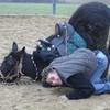 equitation39210