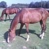 mon-cheval-un-reve
