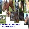 les-poney-magneu