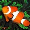 aquariorecifale