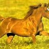 chevalhorse31