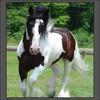 chevaux052