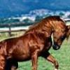 mi-amor-caballos