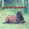 pix-of-horses