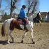 quitry-horse