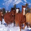 xx-chevauxdu03-xx