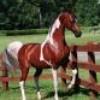 o-horse-o