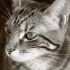 Neko-the-cat