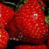 mini-fraise-x