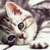 Nessie1993