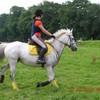 horses-is-my-life76