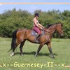 x--Guernesey-II--x