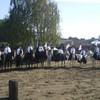 haras-val-pierre-2008