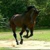 chevauxpassion7