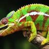 reptil-sand59