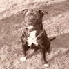 Actiondoggydog-Cooper
