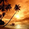 ze-lionne-sou-les-tropik
