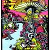 the-crazy-mushroom