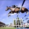 ox-chevauxdesport-xo