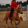 the-horsy