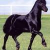 chevauxdu30100