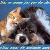 sos-aider-les-animaux