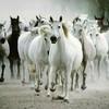 les-chevaux421